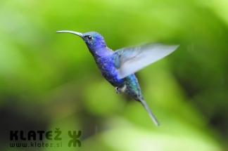 Kostarika_56_JPG