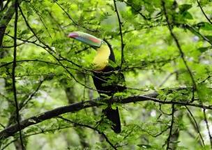 Kostarika_58_JPG