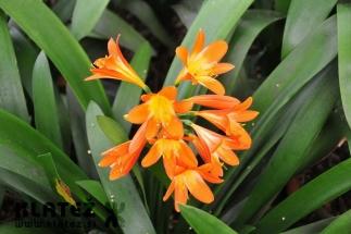 Madeira_036