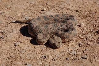 Maroko_051