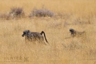 Namibija_008