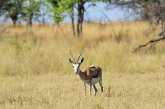 Namibija_023