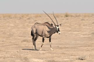 Namibija_026