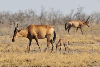 Namibija_028