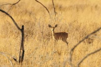 Namibija_029