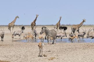 Namibija_031