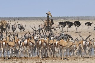 Namibija_032