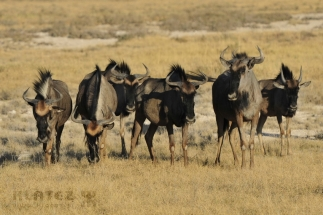 Namibija_039
