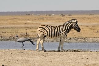 Namibija_040