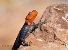 Namibija_065