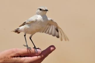 Namibija_085