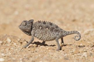 Namibija_086