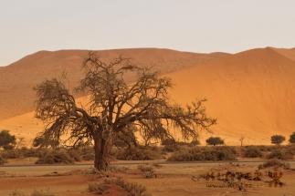 Namibija_100