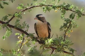 Namibija_105