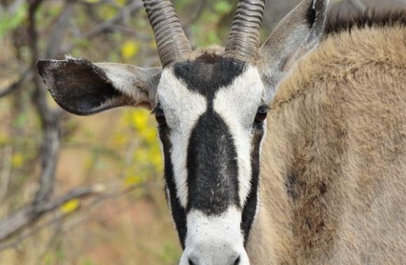 Namibija – 26. maj                    Zagotovljeno
