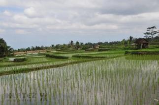 Bali_27