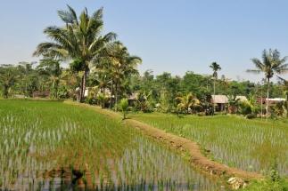 Lombok_11