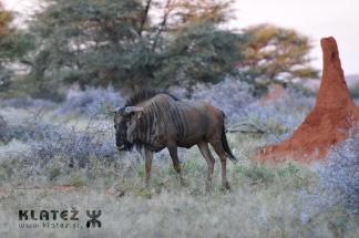 Namibija_2017_014_resize