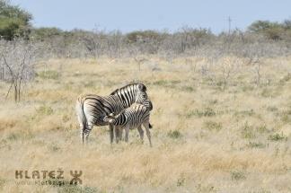 Namibija_2017_019_resize