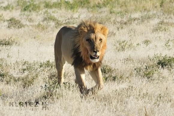 Junijsko potepanje po prostranstvih Namibije