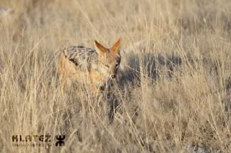 Namibija_2017_027_resize