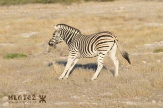 Namibija_2017_028_resize