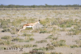 Namibija_2017_032_resize