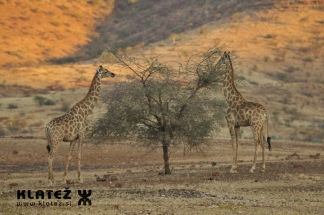 Namibija_2017_052_resize