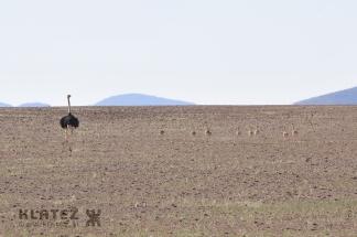 Namibija_2017_087_resize