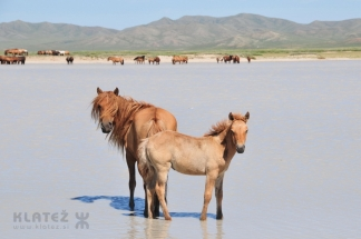 Mongolija_008