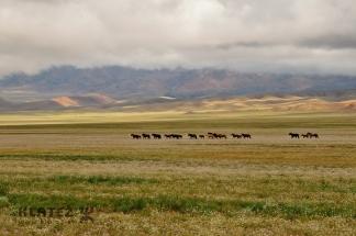 Mongolija_054