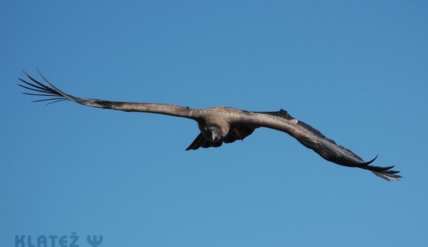 Kondorjev let