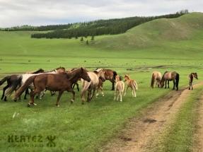 Mongolija_09