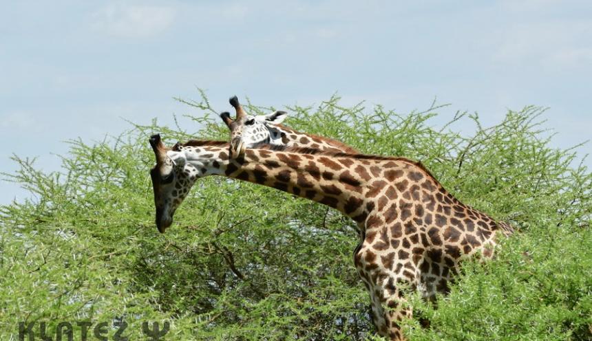 Še en krog po Tanzaniji