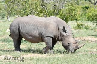 rhino_23