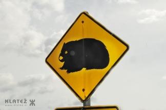 wombat 02