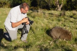 wombat 18