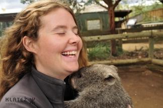 wombat 24